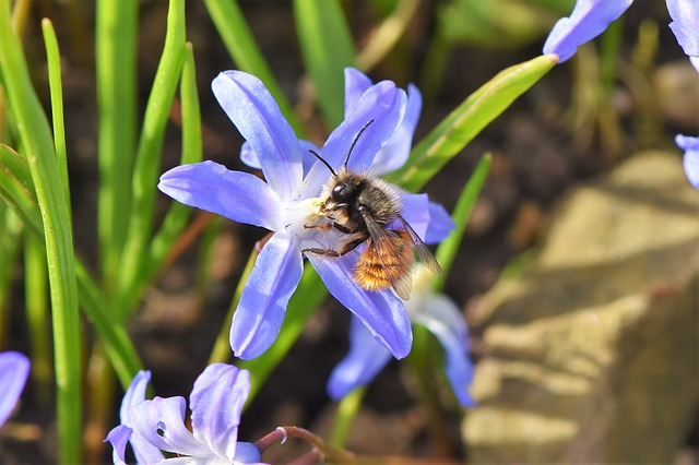 Local Beekeeping Heroes Postcode Honey, Bec;s Beehives, Fergo's Farm