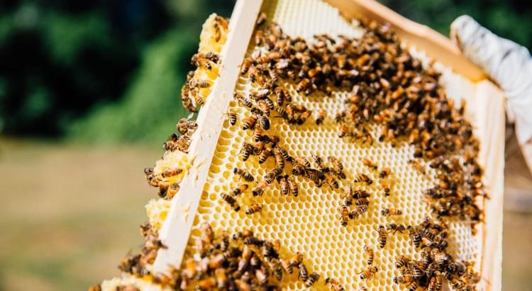 Beekeeping Heroes