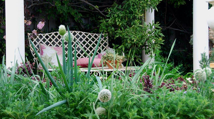 Herb bed with spring onions in flower