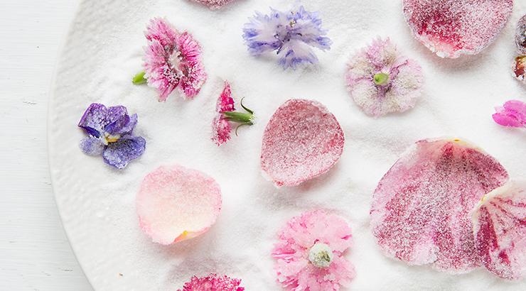 Blog crystallised edible flowers by Jocelyn Cross and Mat Pember