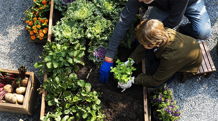 Four Things You Need for Growing Plants with Paul Beveridge of Perth Hills Veggie Co