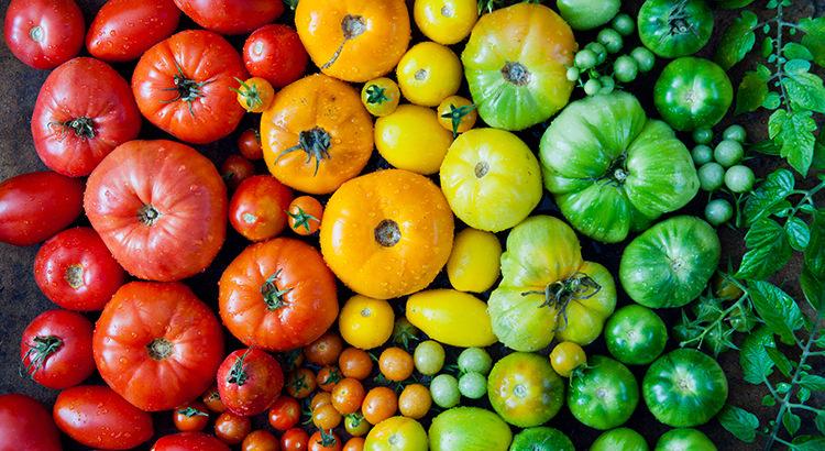 Heirloom vegetables - tomatoes