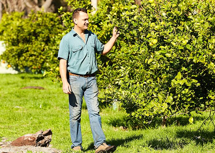 Peter Macaulay of Kitchen Warehouse picking lemons at the family farm