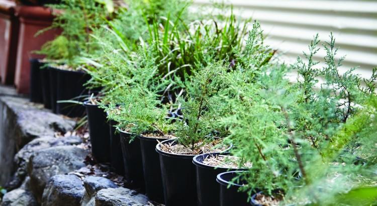 The Garden Apothecary by Reece Carter - Fresh Herbs